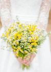 Kwiaty Tygodnia: Rumianki
