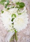Kwiaty Tygodnia: Białe Dalie